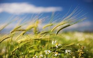 Imagen: http://4.bp.blogspot.com/-nmB-NYixt_0/T7TrK6f9yGI/AAAAAAAAK2Y/GudsyYOTk1A/s1600/viento+(26).jpg
